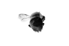 Emmanuel College student, Mollie Salamon, Pollinator