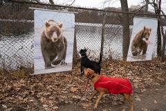 SMFA at Tufts student, Ralph Robinson, Dog Bites Bear, 2019, Archival Digital Photograph