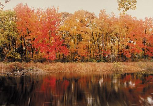Frank gohlke accommodating nature photography